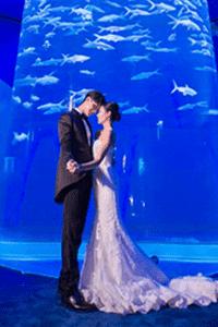 童年回憶返曬嚟!海洋公園2018婚禮Package全面睇