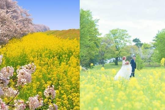 【日本婚紗攝影】10個2020日本櫻花秘點推介