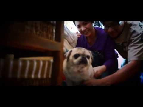 我們和狗狗的10個約定  - 成長片段 - Alice  & Barry  - Stein Image